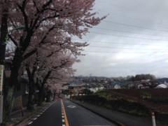 "甲斐 真里 公式ブログ/今年の桜""定点観測編"" 画像3"