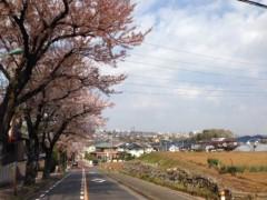 甲斐 真里 公式ブログ/今年の桜・定点観測編その2 画像2