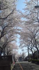 甲斐 真里 公式ブログ/桜のトンネル〜 画像3