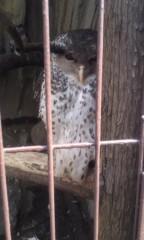 甲斐 真里 公式ブログ/上野『上野動物園』 画像2