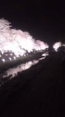 甲斐 真里 公式ブログ/夜桜〜♪ 画像1