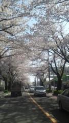 甲斐 真里 公式ブログ/桜のトンネル〜 画像1