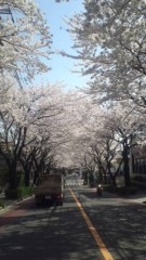 甲斐 真里 公式ブログ/桜のトンネル〜 画像2