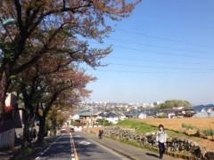 甲斐 真里 公式ブログ/今年の桜・定点観測編その2 画像3