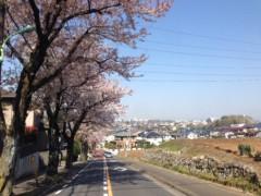 甲斐 真里 公式ブログ/今年の桜・定点観測編その2 画像1