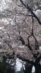 甲斐 真里 公式ブログ/花見 画像2