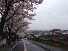 "甲斐 真里 公式ブログ/今年の桜""定点観測編"" 画像2"