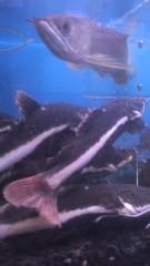 甲斐 真里 公式ブログ/中崎町『佐野熱帯魚』 画像2