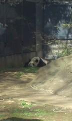 甲斐 真里 公式ブログ/上野『上野動物園』 画像1