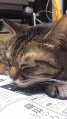甲斐 真里 公式ブログ/猫さん。 画像1
