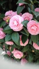 AYUMO 公式ブログ/春うららかに 画像1