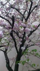 飯島渚 公式ブログ/☆おめでたい☆ 画像1