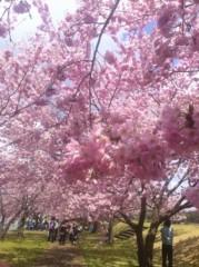 Pearl 公式ブログ/思川桜。 画像1