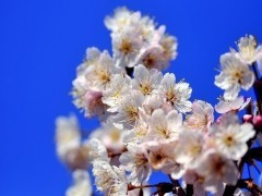 Pearl 公式ブログ/春。 画像1