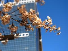 宙SORA 公式ブログ/桜がきれい。 画像1