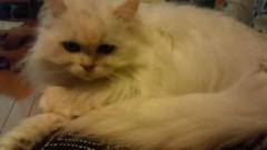 今村美乃 公式ブログ/よっ、白猫屋っ! 画像2