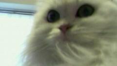 今村美乃 公式ブログ/よっ、白猫屋っ! 画像1