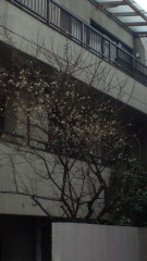 今村美乃 公式ブログ/梅 画像1