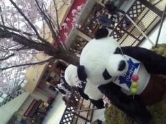 沢木祐介 公式ブログ/上野パンダ開始 画像1