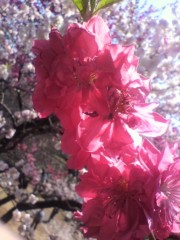 戸田彬弘 公式ブログ/東京 画像2