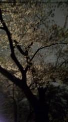 し〜ちゃん 公式ブログ/夜桜〜♪ 画像3