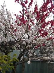 なおみ(チックタックブーン) 公式ブログ/お花見 画像1