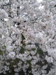 なおみ(チックタックブーン) 公式ブログ/募金 画像1