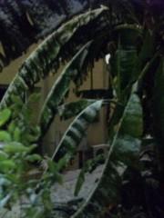 なおみ(チックタックブーン) 公式ブログ/バナナ 画像1