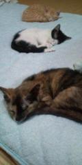 金原亭世之介 公式ブログ/猫の仔三匹とおやすみなさい 画像1