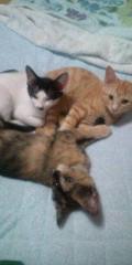 金原亭世之介 公式ブログ/猫の仔三匹とおやすみなさい 画像2