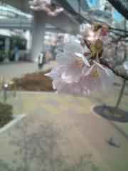 金原亭世之介 公式ブログ/今日は温かいね 画像1