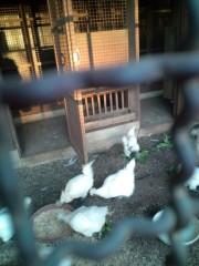 金原亭世之介 公式ブログ/烏骨鶏の卵頂きました! 画像1