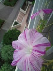 金原亭世之介 公式ブログ/朝顔は秋の花 画像1