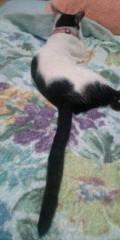 金原亭世之介 公式ブログ/浜松では猫と寝てます 画像3