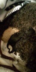 金原亭世之介 公式ブログ/トイプードルまたまた赤ちゃん産みました! 画像2