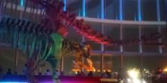 今橋由紀 公式ブログ/恐竜展その2 画像1