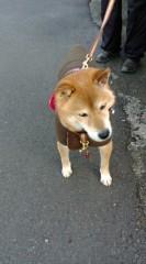 今橋由紀 公式ブログ/愛犬タム 画像1
