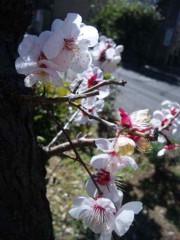 河西里音 公式ブログ/大好きな日本ッ★ 画像3