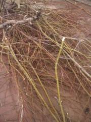 こぼん 公式ブログ/庭の木の枝の伐採! 画像1