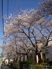 青山利恵 公式ブログ/☆満開☆ 画像1