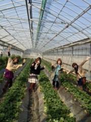 青山利恵 公式ブログ/いちごがり@津久井浜観光農園 画像1