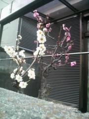 しのへけい子 公式ブログ/節分立春春を探してお散歩です 画像2