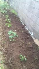 しのへけい子 公式ブログ/家庭菜園はじめました♪ 画像1