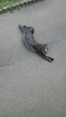 しのへけい子 公式ブログ/ネコとサクラの風景 画像1
