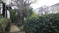 南部虎弾 公式ブログ/お花見中止…ウチの裏側は畑になっていて… 画像1