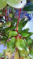 青木治親 公式ブログ/シンボルツリーは気分屋 画像2