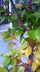 青木治親 公式ブログ/シンボルツリーは気分屋 画像3