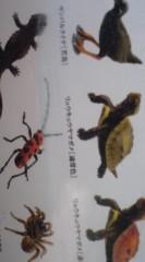 菊池隆志 公式ブログ/『沖縄奄美の動物フィギュア♪』 画像3