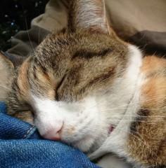 菊池隆志 公式ブログ/『寝るんだにゃ♪(*´ー`*)』 画像3