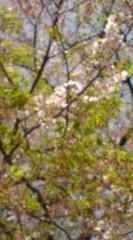 菊池隆志 公式ブログ/『葉桜♪o(^-^)o 』 画像1